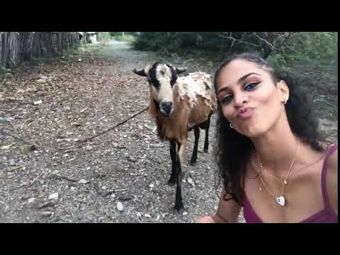 Promo Brady - Girl gets headbutted by a goat while taking a selfie