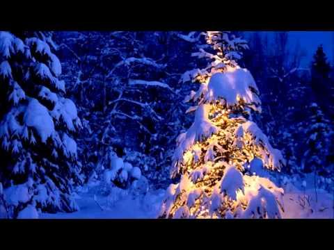 Varpunen jouluaamuna (Subs&Trans) Merry Christmas!