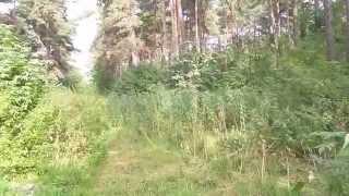 Сосновый бор, Кемерово, сосны, лес(, 2014-09-06T12:36:36.000Z)