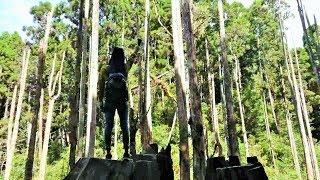 迷境 嶺頭山 海拔2000公尺周邊三叉路口到忘憂森林的景色