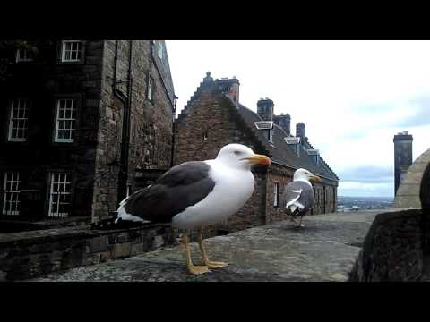 Dumb cunt gets up close and personal with a seagull