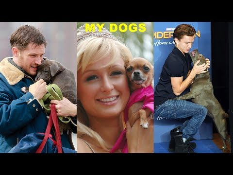 Top 15 Hollywood Stars With Their Dogs