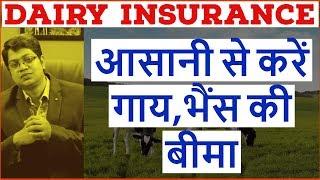 How to Buy Dairy Insurance   Cattle Insurance   आसानी से करें गाय,भैंस की बीमा