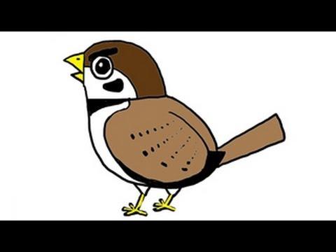 วาดรูป การ์ตูน นกกระจอก หัวโต