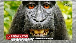 видео «Як захистити авторське право на фотографію?»