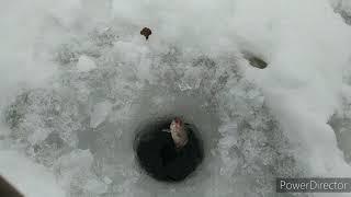 Рыбалка на плотине в Деревне Нефедьево 1 января