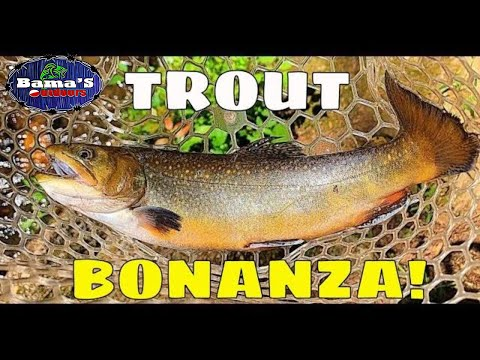 TROUT FISHING NORTH GEORGIA'S DICKS CREEK| TROUT BONANZA