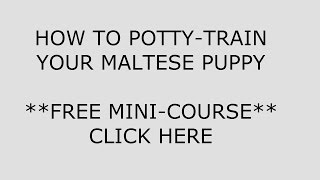 **How to Potty Train a Maltese PuPPy**BOW !! cLICK hERE