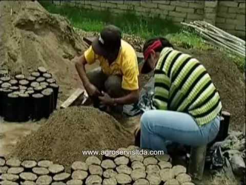 1 d tecnicas de producci n de plantones en el vivero for Proyecto vivero forestal pdf