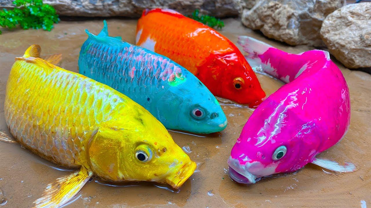 다채로운 물고기는 노란 장어를 먹는다 Stop Motion Cooking ASMR 메기 스포츠 대회/ 스톱모션 요리 Funny Video
