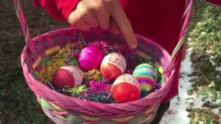 Tommy's Easter Beagle Dance With His Ottawa Lions Track Club Decorated Eggs