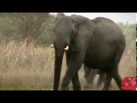 Exciting Elephant Hunt Caprivi