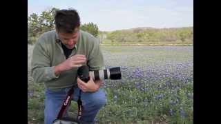 A Photographic Moment | Composing for Wildflowers and the Spring Landscape