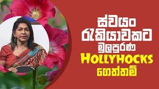 ස්වයං රැකියාවකට මුලපුරණ Hollyhocks ගෙත්තම්   Piyum Vila   06 - 07 - 2021   SiyathaTV Thumbnail