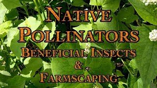 Native Pollinators Beneficial Insects & Farmscaping