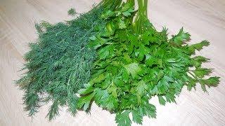 ✅ЛАЙФХАК: Как сохранить зелень свежей надолго/Укроп и петрушка