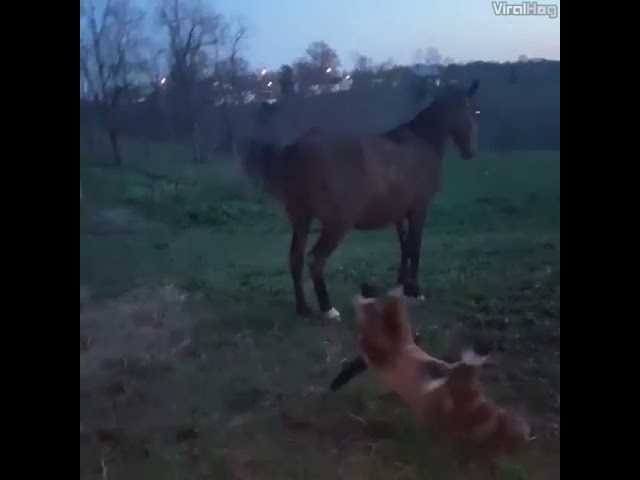 "Nope, you are fake horse!"" ??"