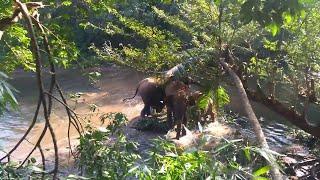 marine-park-bali Bali Elephant Safari Park