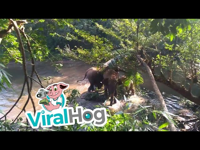Baby Elephant Rescued from Mud Hole