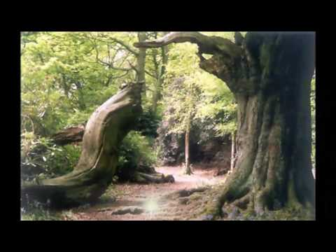Haunting History of  Ecclesall Woods, Dore, Sheffield, South Yorkshire,Sheffield,England