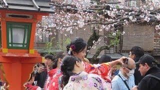 2019年 京都の春 祇園白川の桜