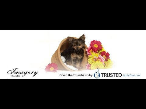 Imagery Photography are Trusted Saskatoon Photographers
