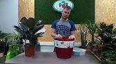 Кашпо lamela по минимальной цене в интернет-магазине искусственных растений gewas-green. Бесплатная доставка.