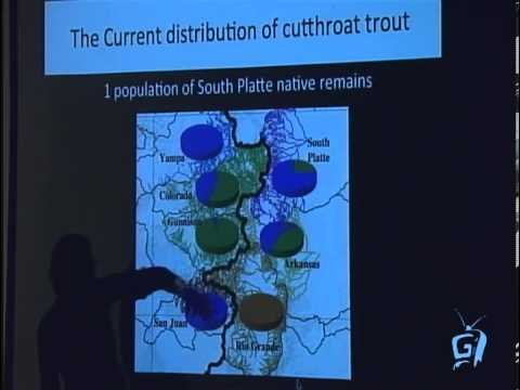 The Journey of Cutthroat Trout in Colorado, Jessica Metcalf