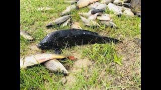 Чёрный сазан рыбалка на реке Или бешеный клев, Балхаш не в Алматы