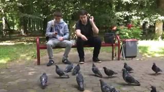 Кормите голубей осторожнее