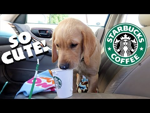 PUPPY GOES TO STARBUCKS!!