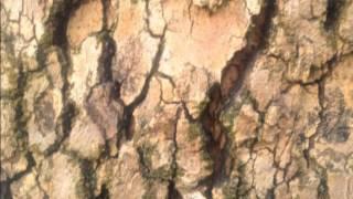 Seasons Trees Danger Mouse - ft. Norah Jones