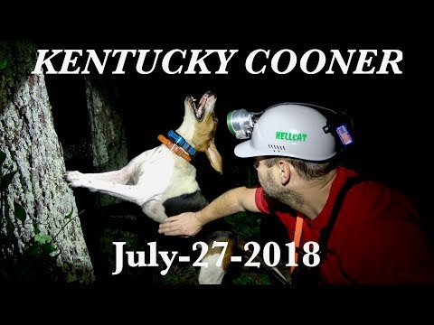 Wild Coon Hunt With Nightfall Adventures