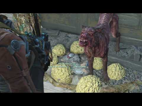 How To Find A Second Dog Companion Called Sparcky: FALLOUT 4
