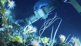 深海は宇宙と同じくらい不思議と謎で満ち溢れている。まだ見ぬ生命体を探しに深海へGO!(アメリカ海洋地質学研究)