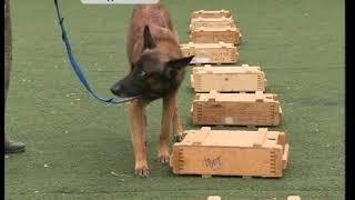 Десятилетие кинологической службы собаки встречают на спортивной площадке