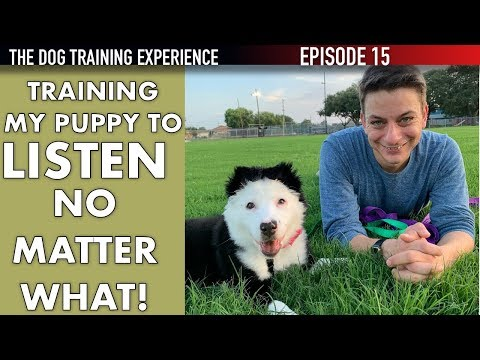 How I'm Training My Puppy To Listen No Matter What!