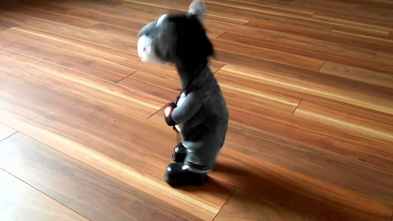 Tanzender Esel