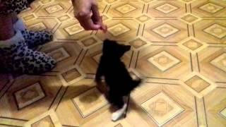 Котёнок и кусочек сырого мяса:D