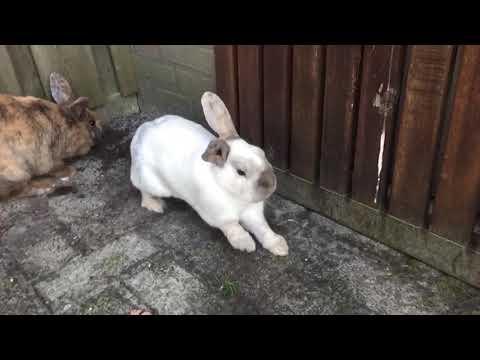 Zes konijnen wennen aan elkaar