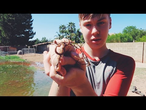 SNAKES & other Flood Irrigation issues