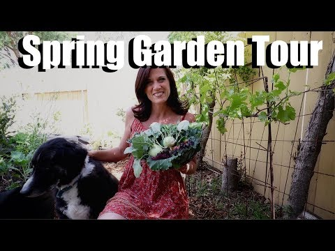 Spring Garden Tour and Surprise Harvest, Tips & Tricks