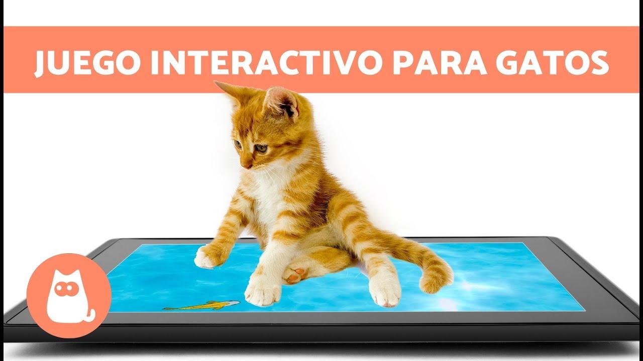 Juego Interactivo Para Gatos De Peces En La Pantalla Youtube