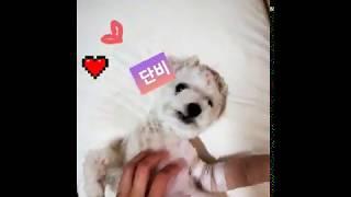 베개 위 댄스 단비  putty on a pillow