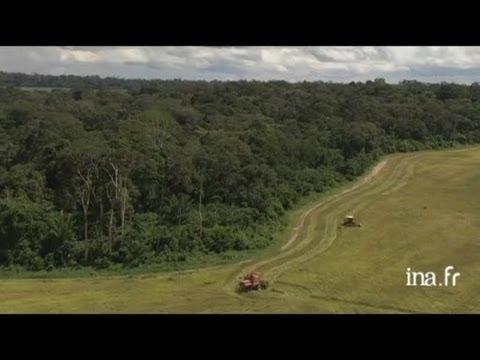 Brésil : forêt et champs cultivés en Amazonie