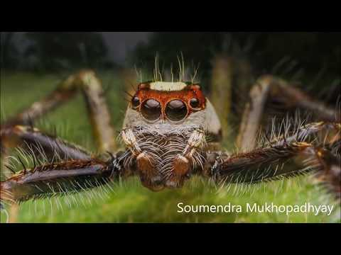 Best of the Team - DCP Wildlife Photography Annual Awards 2017