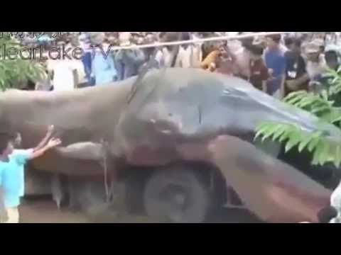 Sea Monster Wash Ashore in South Asia