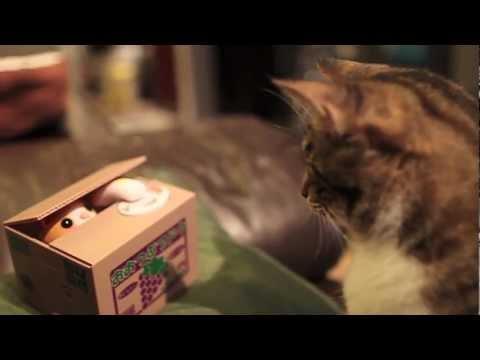 Real Cat vs Fake Mechanical Cat Piggy Bank -- Real Cute!!!