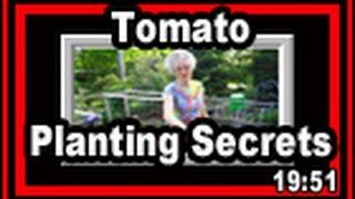 Tomato Planting Secrets - Wisconsin Garden Video Blog 395