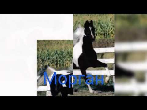 Породы лошадей картинки